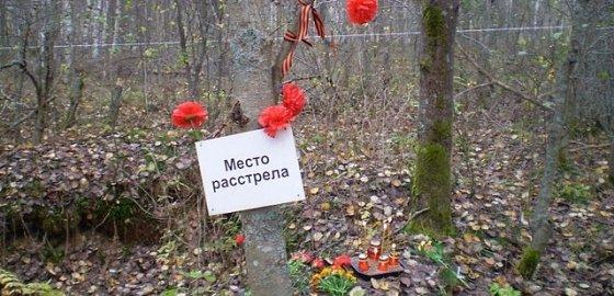 Лес прячет могилы