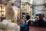 Фоторепортаж: «Музей Арктики и Антарктики»