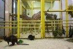 Жирафы в Ленинградском зоопарке: Фоторепортаж