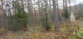 Суд отменил забор в лесу