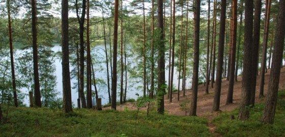 «Лесна» с лесом не срослась