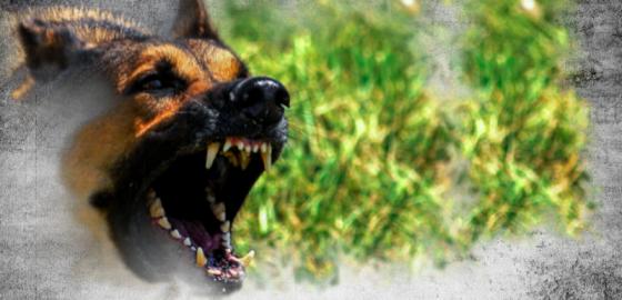 Намордник для собаковода