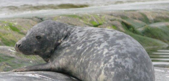 Острова для тюленей