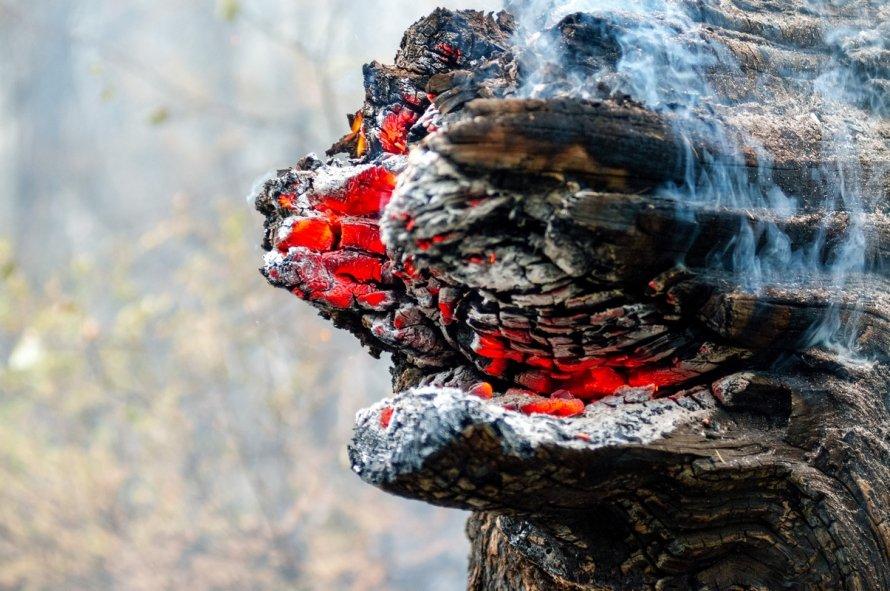 """Лесные пожарные """"Гринпис"""" на Байкале"""