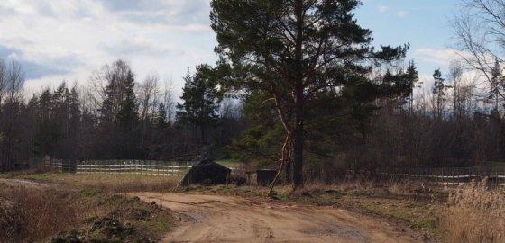 Суд разрешил захватывать лес