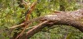 Институт лесного хозяйства в отсутствие лесного хозяйства