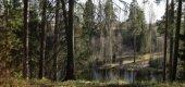 Последняя надежда Сиверского леса