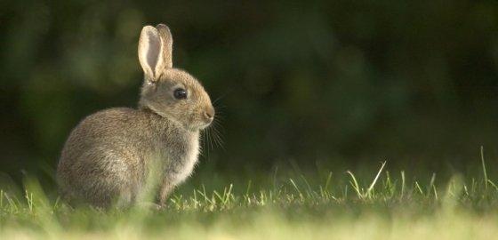ОМОН и кролики