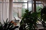 Дом творчества кинематографистов «Репино» закрыт с 2012 года: Фоторепортаж
