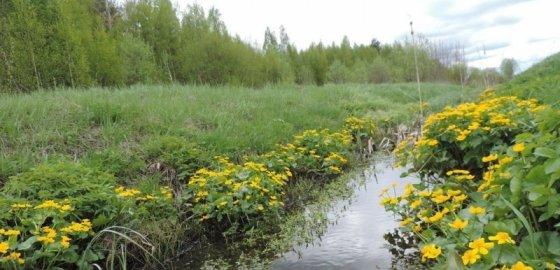 Защитники болота увязли в бюрократической трясине