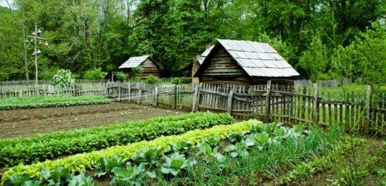 Садоводы в серой зоне