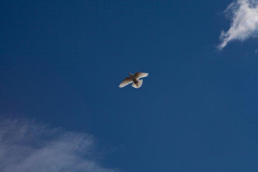Один день голубятника