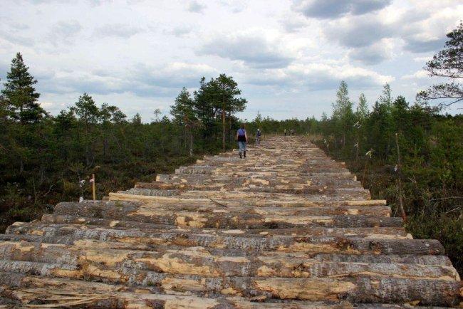 Бревенчатая дорога, проложенная строителями через редкое верховое болото Кадер в Кургальском заказнике // Фото: предоставлены сотрудниками БИН РАН