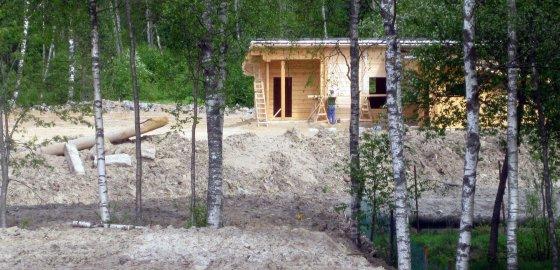 Вернуть лес тяжелее, чем посадить чиновника