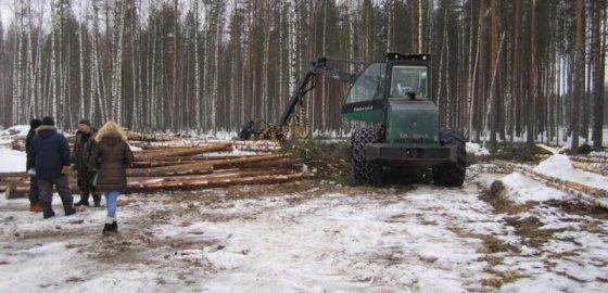 Лес гибнет из-за бумажки