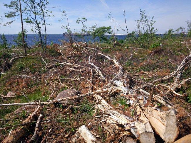 Рубка леса у поселка Ермилово. Фото: Лина Епифанцева