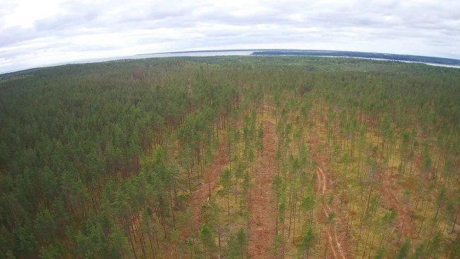 Вырубка леса под строительство. Фото: из архива автора