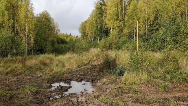Первый участок Галич-Парфеньево. Фото: Денис Коротков / «Новая газета»