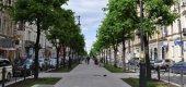 Петербуржцев приглашают на первое мультимедийное шоу распускающихся роз