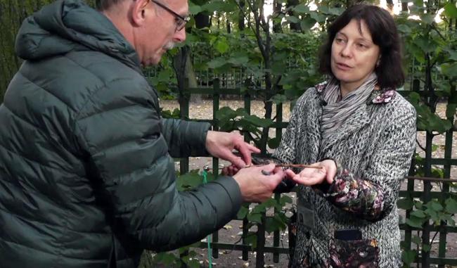 Леонид Леонтьев и Екатерина Жукова во время работ по кернению деревьев