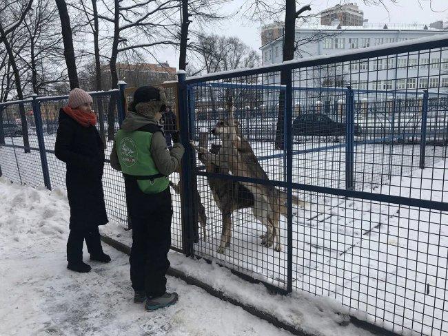 На прогулке. Приют Смоленка. Фото: Ирина Тумакова / «Новая газета»