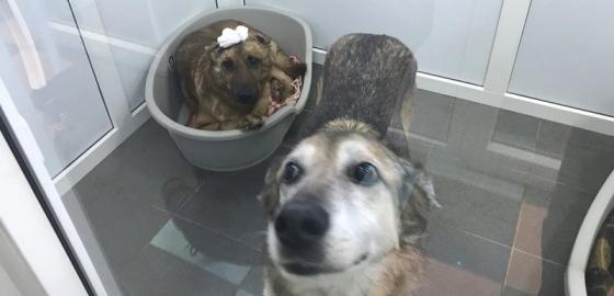 Созвездие добрых псов